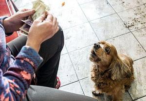 Как расплатиться за лотерейный билет онлайн